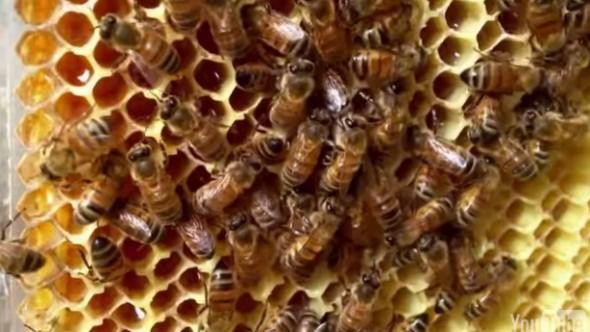 Flow Hive17