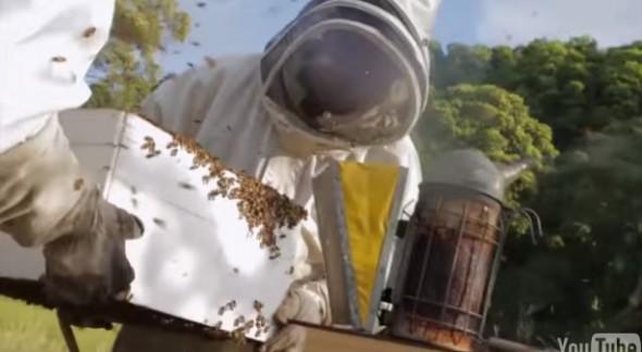 Flow Hive4