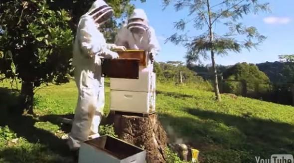 Flow Hive9