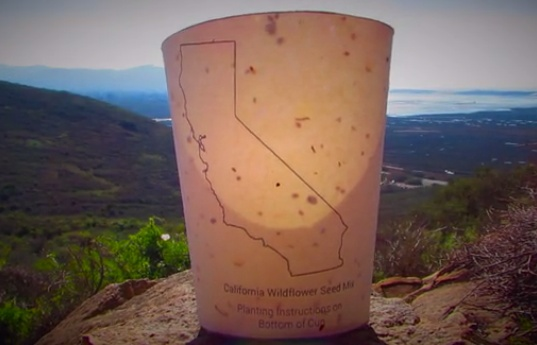 Plantable Coffee Cup 1