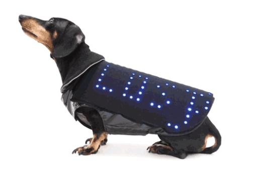 Disco Dog 7