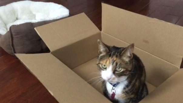 Boxy Bed 5
