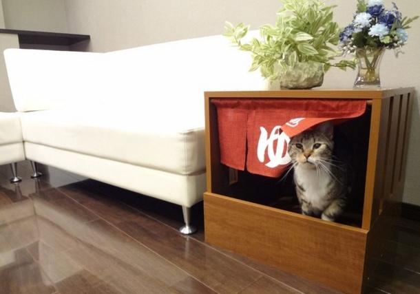 Cat hot spring 10