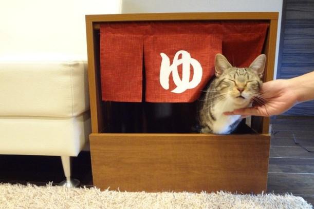 Cat hot spring 11