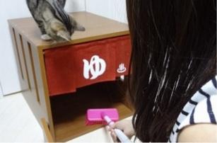 Cat hot spring 3