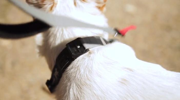 dog leash 13.jpg