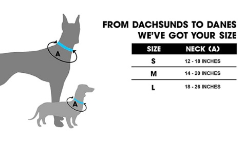 dog leash 9.jpg