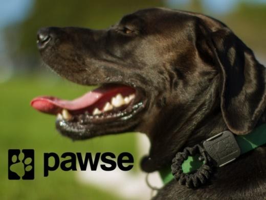 Pawse 1