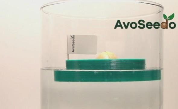 AvoSeedo9