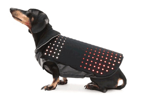 Disco Dog 1