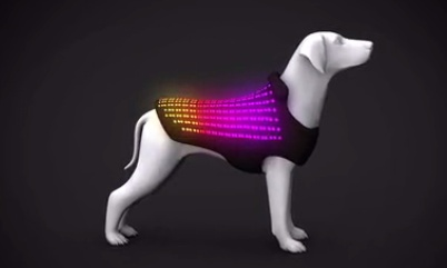Disco Dog 3