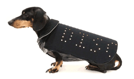 Disco Dog 6