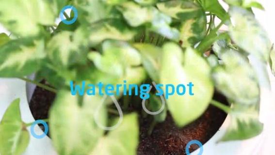 planty4-1