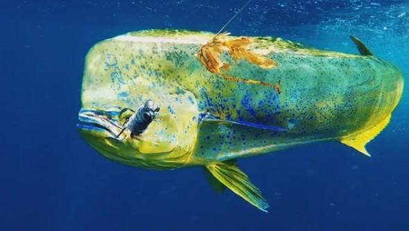 GoFish Cam12