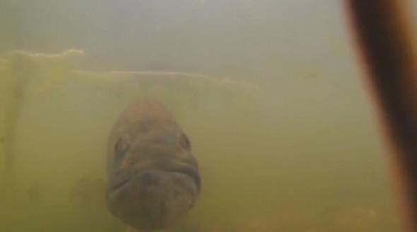 GoFish Cam4
