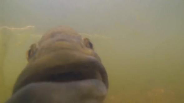 GoFish Cam5