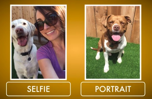 Pooch Selfie 12
