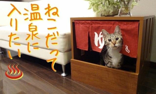 Cat hot spring 1