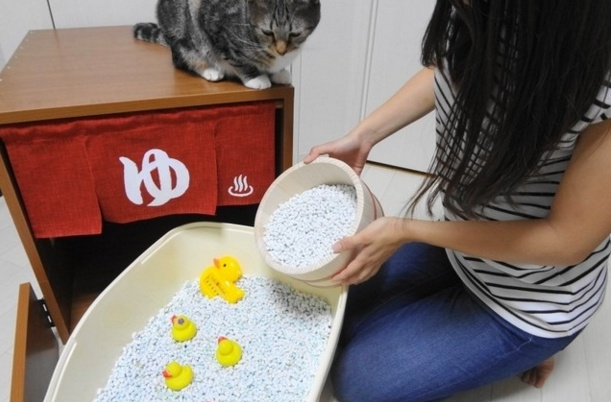 Cat hot spring 8