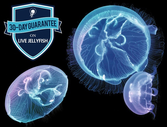 Jellyfish Aquarium 12
