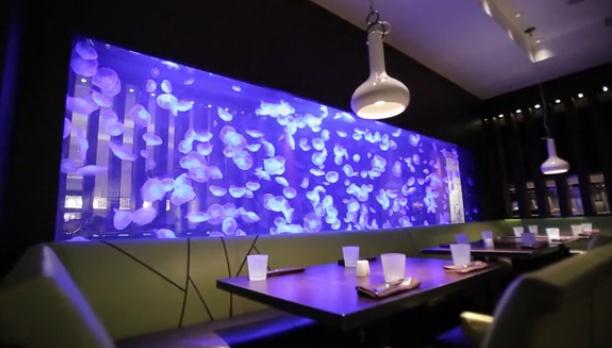 Jellyfish Aquarium 4