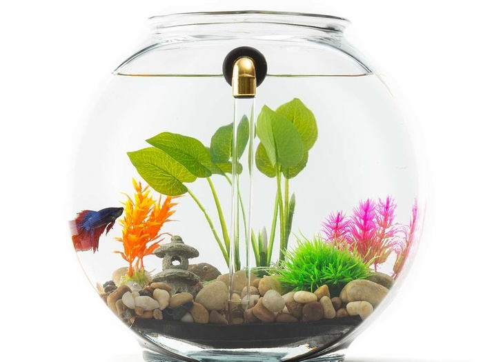 Gravityflow2 for How often do you clean a fish tank