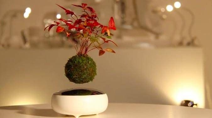 bonsai3.jpg