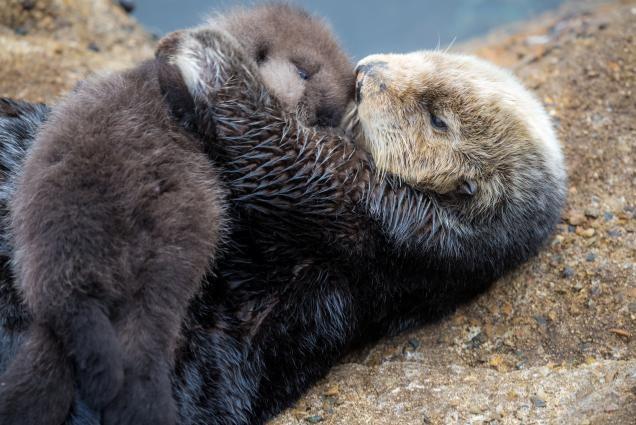The Tea Otter 4.jpg