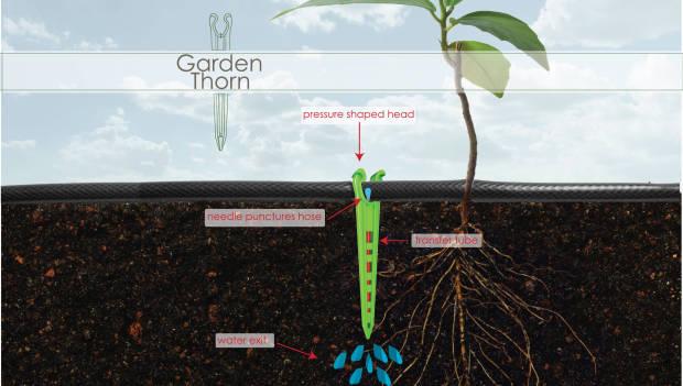 Garden Thorn1.jpg