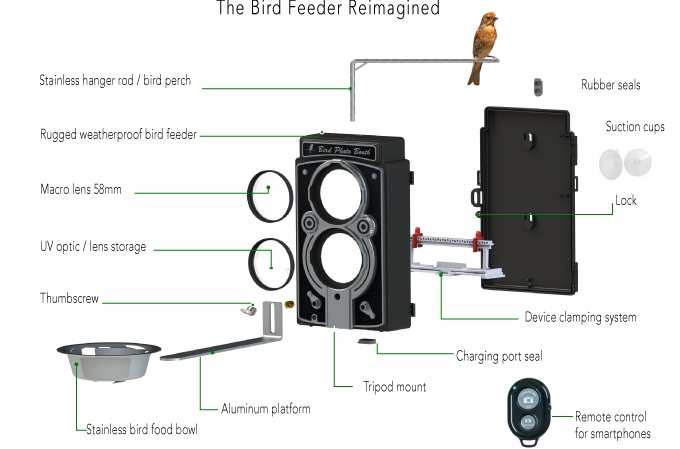 Bird13.jpg