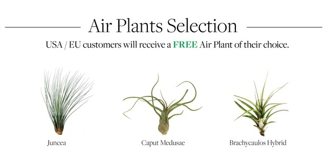 flying plant8.jpg