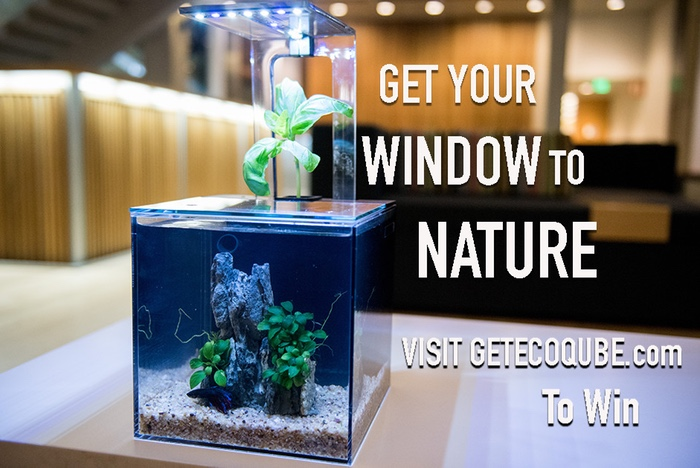 EcoQube14.jpg