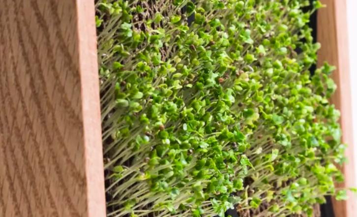 EcoQube16.jpg