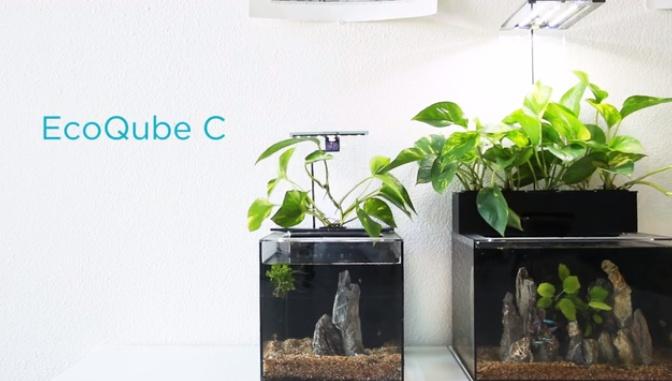 EcoQubeC11.jpg