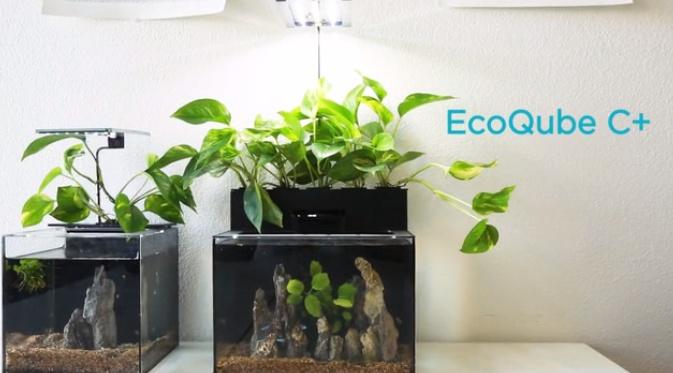 EcoQubeC12.jpg