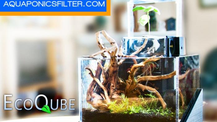 EcoQubeC17.jpg