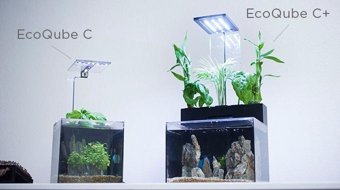 EcoQubeC19.jpg