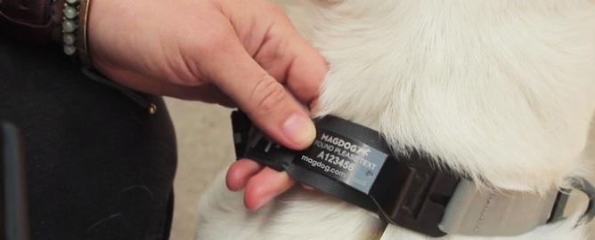 dog leash 4.jpg