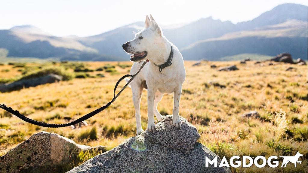 magdog 20.jpg