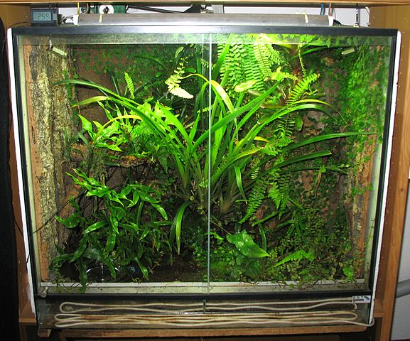 577px-Regenwaldterrarium.jpg