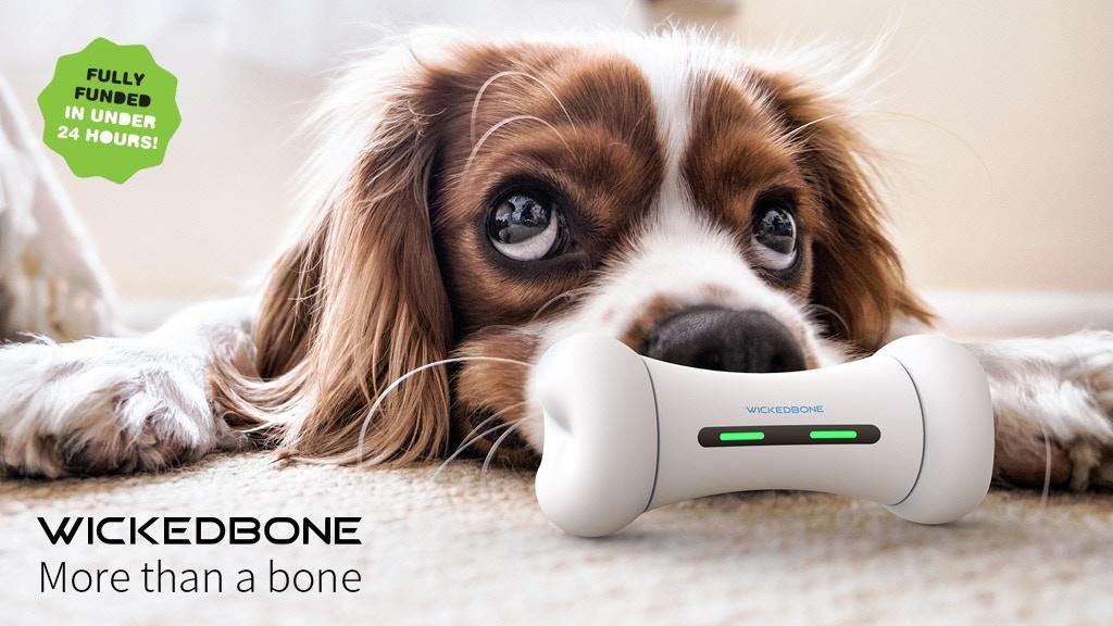 dog toy 1.jpg