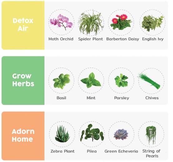 planter 9.jpg