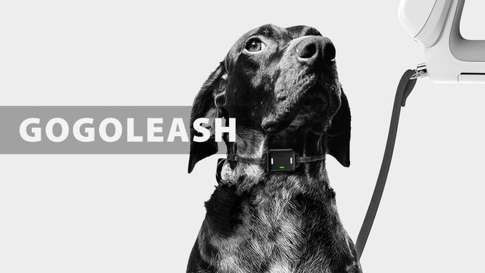 leash 1.jpg